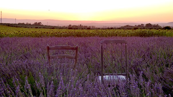 Lavender, Field, Sunset, Chairs