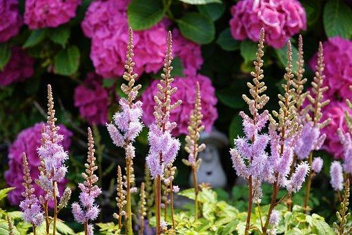 Summer, Garden, Flowers, Pink, Violet
