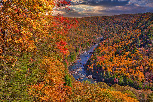New River, Trees, Fall, Color, River, Stream