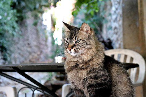 Cats, Felines, Tabby, Predator, Cute, Adorable, Sitting