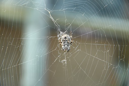 Spider, Spider Web, Arthropod, Animal, One, Predator