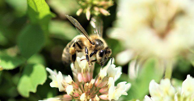 Bee, Insect, Plant, Summer, Garden, Botany, Collecting