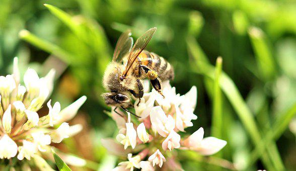 Bee, Insect, Plant, Summer, Garden