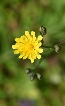 Garden, Nature, Flower, Summer, Plants, Bloom, Petals