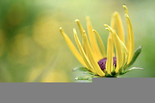 Blossom, Bloom, Flower, Bright, Petals, Sunny, Nature