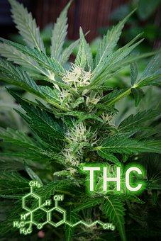 Thc Formula, Cannabis, Hemp, Marijuana, Plant, Leaf