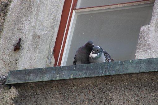 Pigeons, Couple, Birds, Window, City