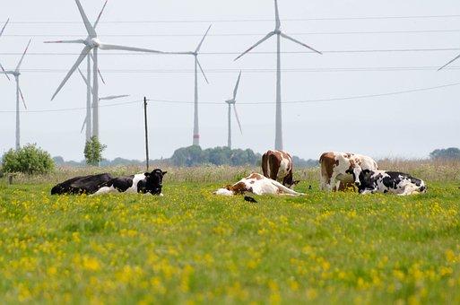 Cow, Pinwheel, Agriculture, Animals, Livestock