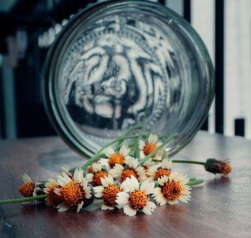 Daisies, Wild, Flowers, Wildflowers, Spring, Nature