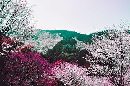 Nature, Tree, Landscape, Wood, Fall, Trees, Environment