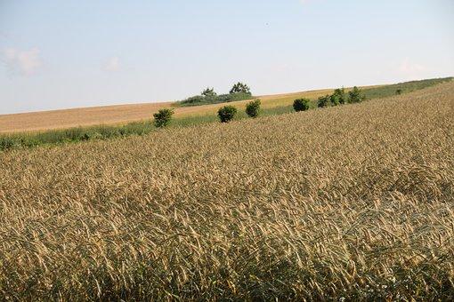 Field, Cereals, Landscape, Austria