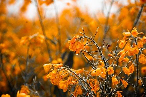 Flower, Mustard, Mustard Flowers