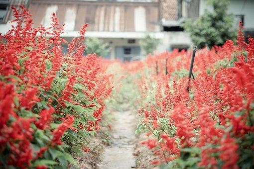 Flowers, Red, Love, Garden, Plant, Nature, Summer