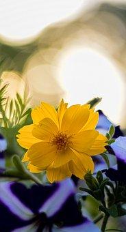 Outdoor, Flower, Bokeh, Nature, Happy