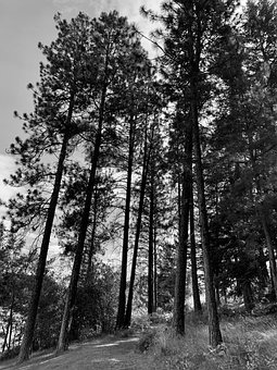 Trees, Trail, Path, Hiking, Environment