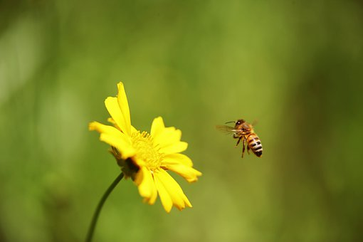Yellow Flower, Honeybee, In A Instinct, Naturally