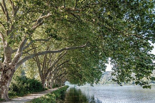 Eat, Lake, Baldeneysee, Nature, Water, Landscape