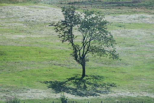 Tree, Field, Shadow, Landscape, Pre, Fields, Nature