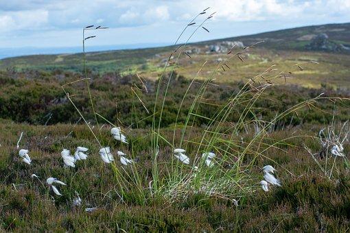 Moorland, Grass, Nature, Landscape, Sky, Scenic