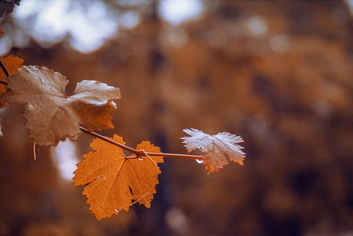 Leaves, Nature, Tree, Beautiful, Pakistan, Forest, Drop
