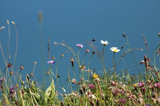 Flowers, Field, Lake, Nature, Mountain, Blue