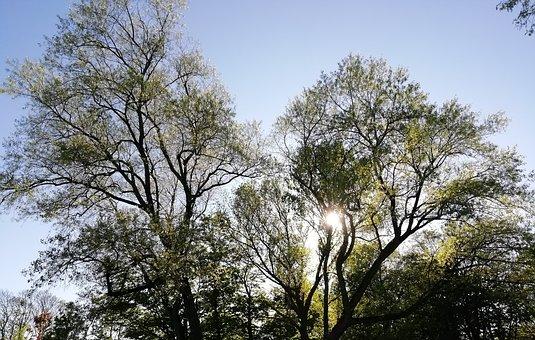 Trees, Sky, Spring, Nature, Landscape