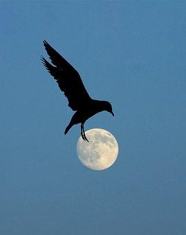 Moon, Night, Bird In Flight, Wings, Flying, Silhouette