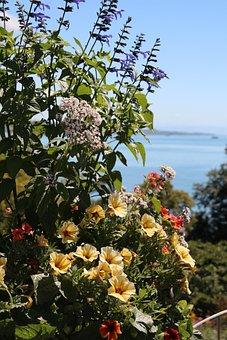 Mainau, Lake Constance, Island, Park, Flower, Summer