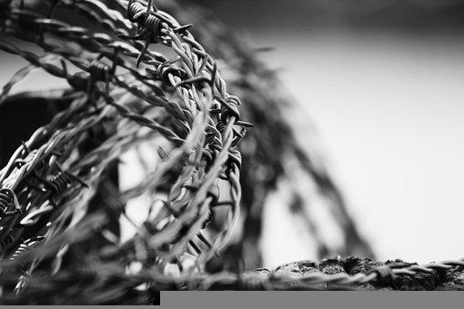 Barbed Wire, Border, Freedom, Metal, Prison, Protection