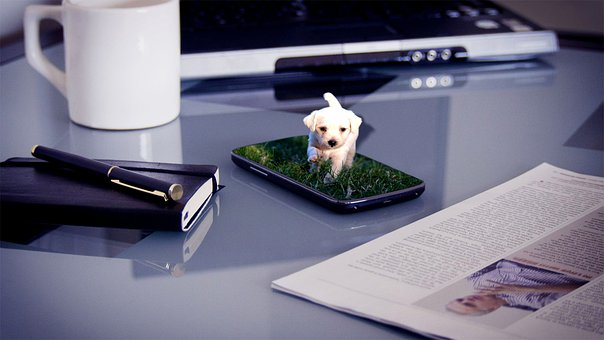 Dog, Puppy, Grass, Walking, Android, Smartphone