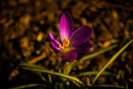 Purple, Flower, Single, Nature, Blossom, Meditation
