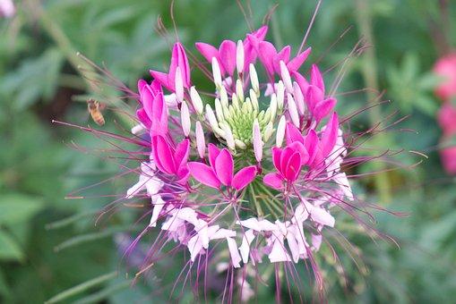 Flower, Plant, Nature, Pollinator, Quebec, Canada