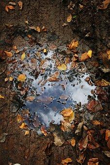 Puddle, Autumn, Road, Rain, Nature, Leaf, Wet, Water