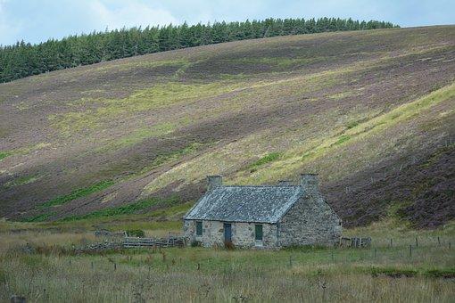 Scotland, Heather, Landscape, Highland, Hill