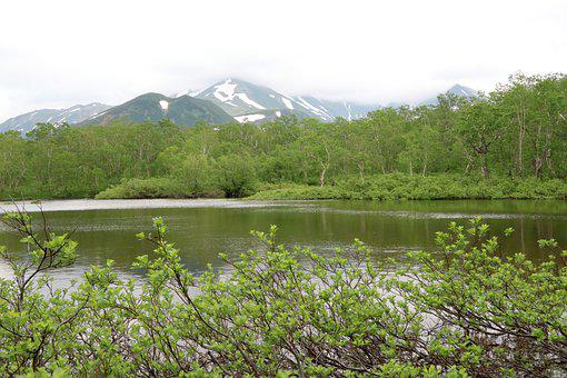 Lake, Forest, Mountains, The Bushes, Trees, Silence