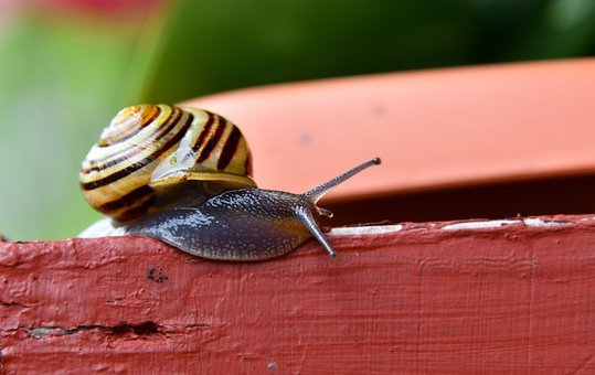 Snail, Cottage, Mollusk, Slow, Slime, In The Garden