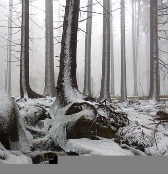 Forest, Winter, Cold, Snow, Fog, Trees, Log, Contrast
