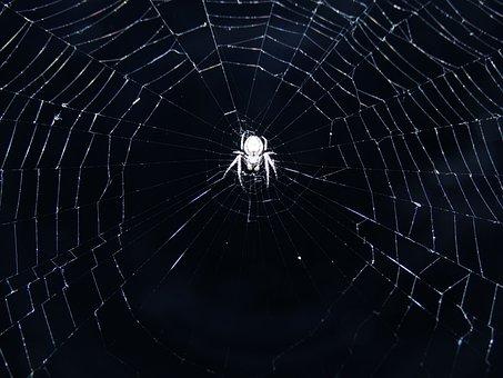 Spider, Spiderweb, Web, Night, Flash, Waiting, Lurking