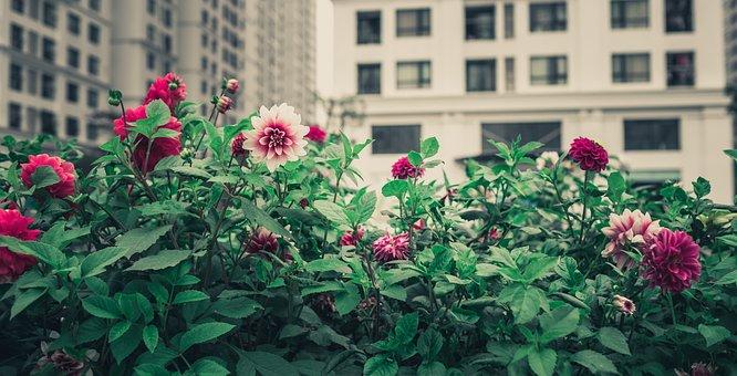 Wild Flowers, Plant, Garden, Red