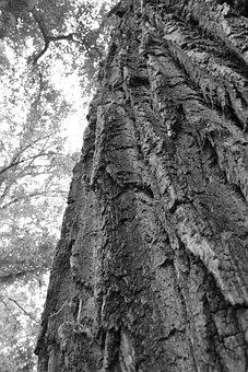 Wood, Tree, Background, Bark, Coarse, Forest, Nature