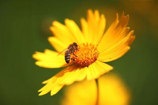 Instinctively, Yellow Flower, Honey, Bee