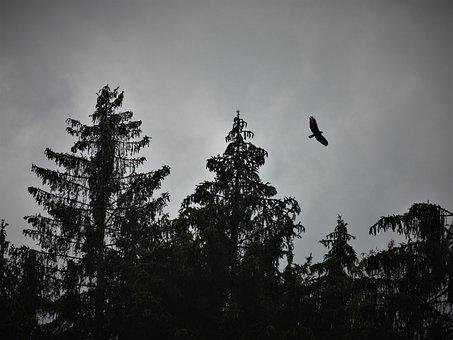 Busard, Bird, Flying, Animal, Freedom, Glide, Flight