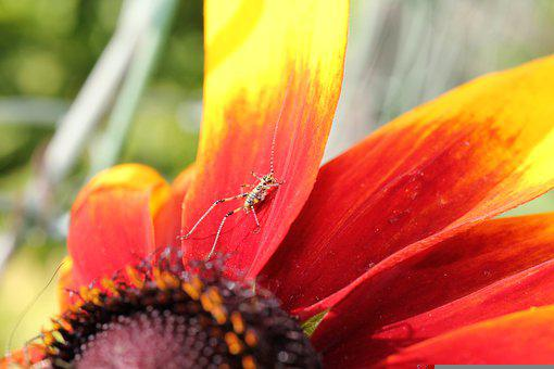 Insect, Close Up, Coneflower, Echinacea, Summer, Yellow