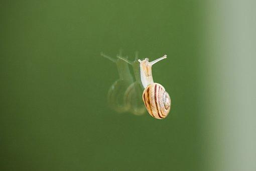 Snail, Crawl, Glass, Mirroring, Animal World, Animal