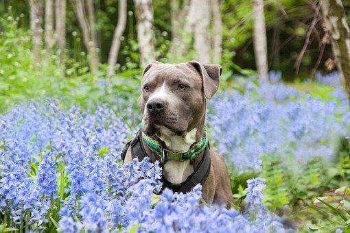 Dog, Pet, Animal, Portrait, Nature, Friend, Dog Look