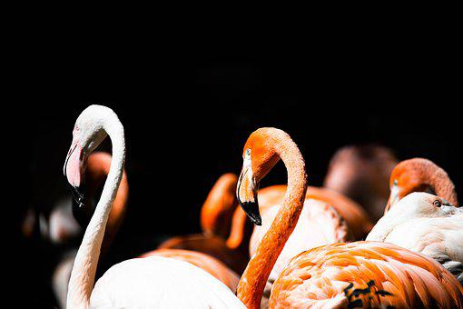 Flamingo, Asia, India, Nature, Water, Travel, Herd