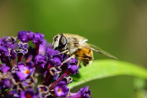 Kid Stories, Flower, Insects, Flies, Macro, Pollen