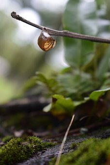Nature, Green, Leaves, Landscape, Plant