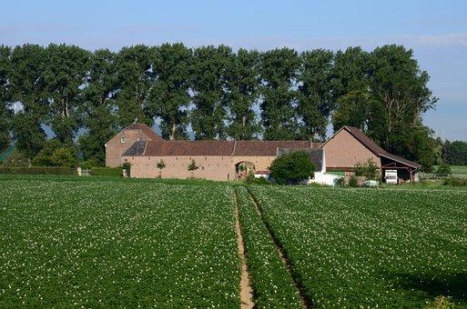 Landscape, Farm, Agriculture