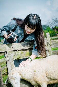 Girl, Sheep, Young, Lady, Lamb, Meadow, Hair